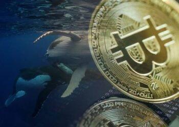 Kdo jsou všechny bitcoinové velryby a jaké jsou jejich podíly